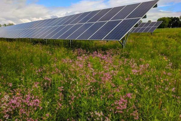 solar array with wild flowers